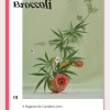 Broccoli – A Magazine for Cannabis Lovers